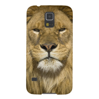 African Barbary Lion, Panthera leo leo, one of Galaxy S5 Covers