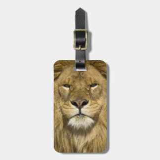 African Barbary Lion, Panthera leo leo, one of Tag For Luggage
