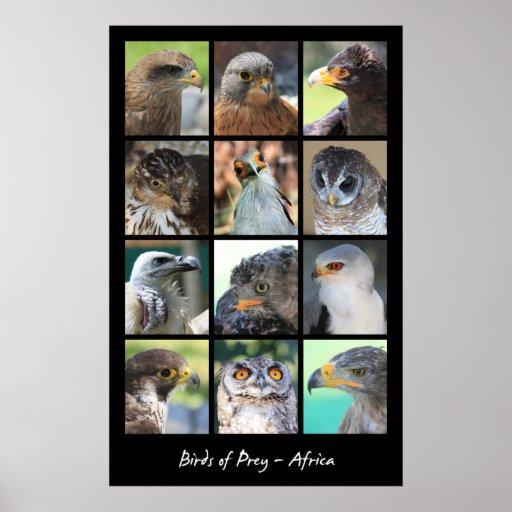 African Birds of Prey Poster