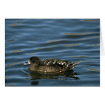 African Black Duck Greeting Card