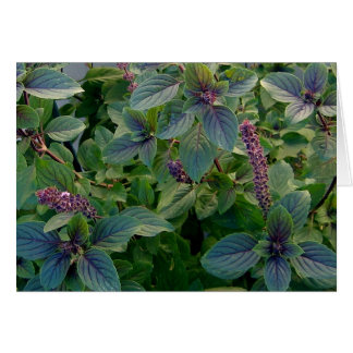 African Blue Basil Card