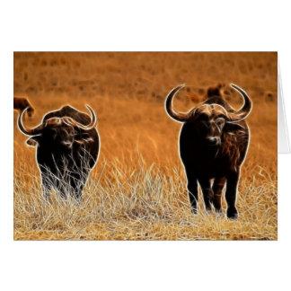 African Buffalo Card