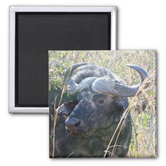 African buffalo square magnet