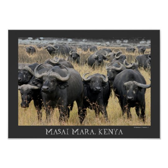 African Buffaloes of the Masai Mara Poster