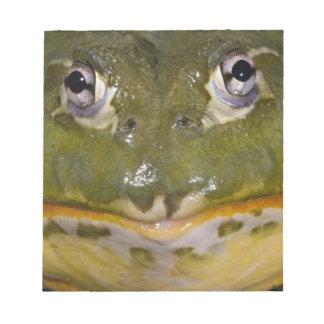 African Burrowing Bullfrog, Pyxicephalus Notepad