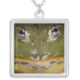African Burrowing Bullfrog, Pyxicephalus Silver Plated Necklace