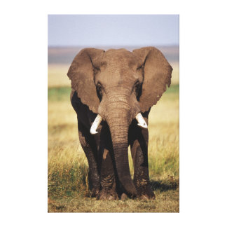 African Bush Elephant Canvas Print