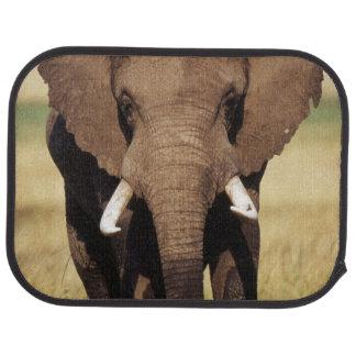 African Bush Elephant Car Mat