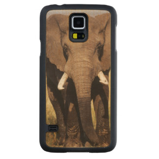 African Bush Elephant Carved Maple Galaxy S5 Case