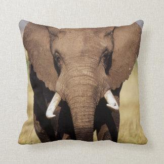 African Bush Elephant Cushion