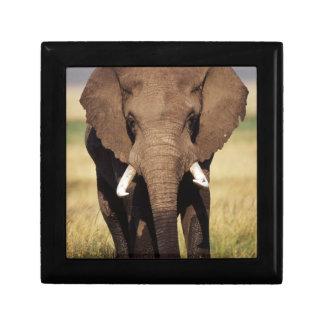 African Bush Elephant Gift Box