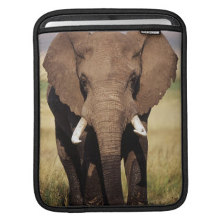 African Bush Elephant iPad Sleeve