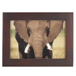 African Bush Elephant Keepsake Box