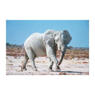 African Bush Elephant (Loxodonta Africana) 2 Canvas Print