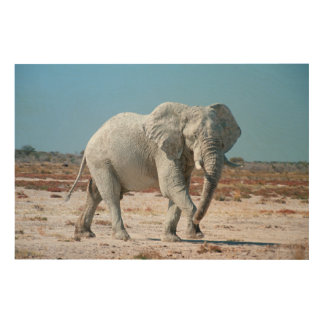 African Bush Elephant (Loxodonta Africana) 3 Wood Wall Decor