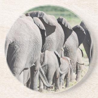 African Bush Elephant (Loxodonta Africana) 4 Coaster