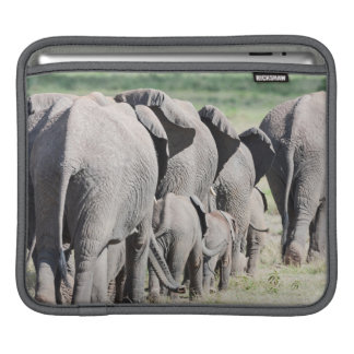 African Bush Elephant (Loxodonta Africana) 4 iPad Sleeve