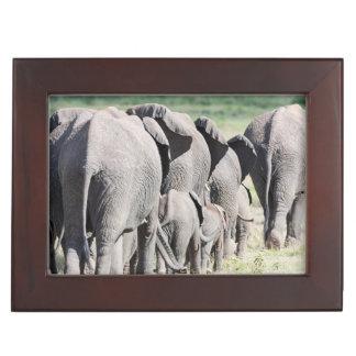 African Bush Elephant (Loxodonta Africana) 4 Keepsake Box