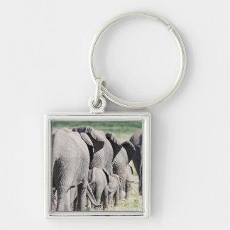 African Bush Elephant Loxodonta Africana 4 Keychains