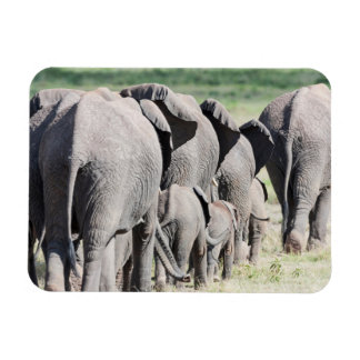 African Bush Elephant (Loxodonta Africana) 4 Rectangle Magnet
