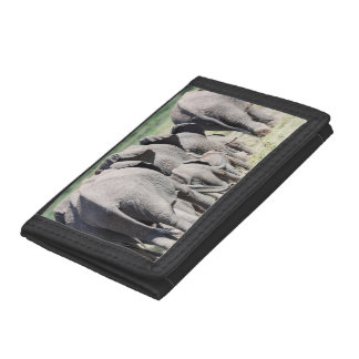 African Bush Elephant (Loxodonta Africana) 4 Trifold Wallets