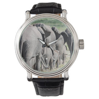 African Bush Elephant (Loxodonta Africana) 4 Watch