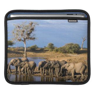 African Bush Elephant (Loxodonta Africana) Herd iPad Sleeve