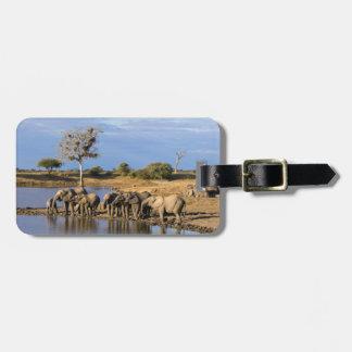African Bush Elephant (Loxodonta Africana) Herd Luggage Tag