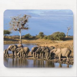 African Bush Elephant (Loxodonta Africana) Herd Mouse Pad