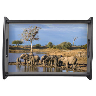 African Bush Elephant (Loxodonta Africana) Herd Serving Tray