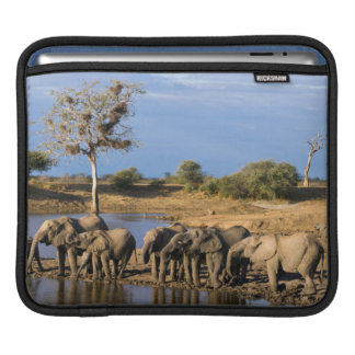 African Bush Elephant (Loxodonta Africana) Herd Sleeves For iPads