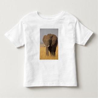African Bush Elephant Loxodonta africana) on Toddler T-Shirt