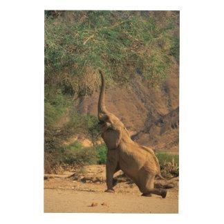 African Bush Elephant (Loxodonta Africana) Wood Print