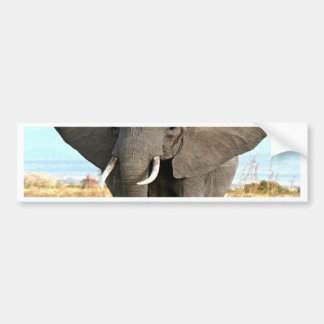 African Bush Elephant Marching to success goal Bumper Sticker
