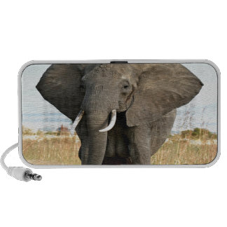 African Bush Elephant Marching to success goal Mp3 Speaker