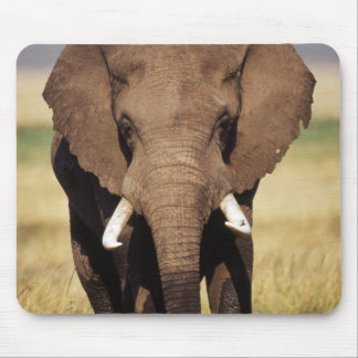 African Bush Elephant Mouse Pad