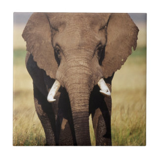 African Bush Elephant Tile