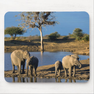 African Bush Elephants (Loxodonta Africana) Mouse Mat