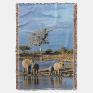 African Bush Elephants (Loxodonta Africana) Throw Blanket
