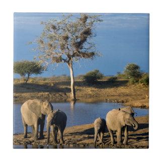 African Bush Elephants (Loxodonta Africana) Tile