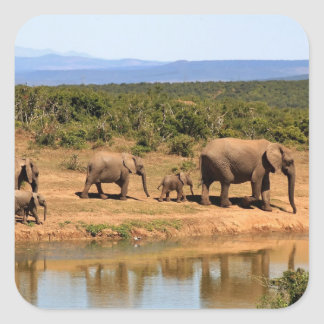 African Bush Elephants, Safari Animals Stickers