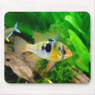 African Butterfly Cichlid Mouse Mat