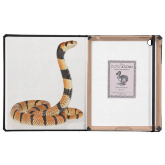 African coral snake (Aspidelaps lubricus) iPad Cases