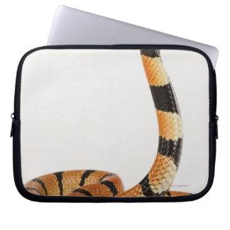 African coral snake (Aspidelaps lubricus) Laptop Sleeve