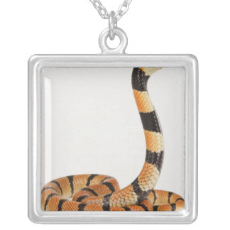 African coral snake (Aspidelaps lubricus) Silver Plated Necklace
