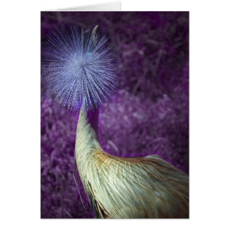 african crowned crane - purple note card