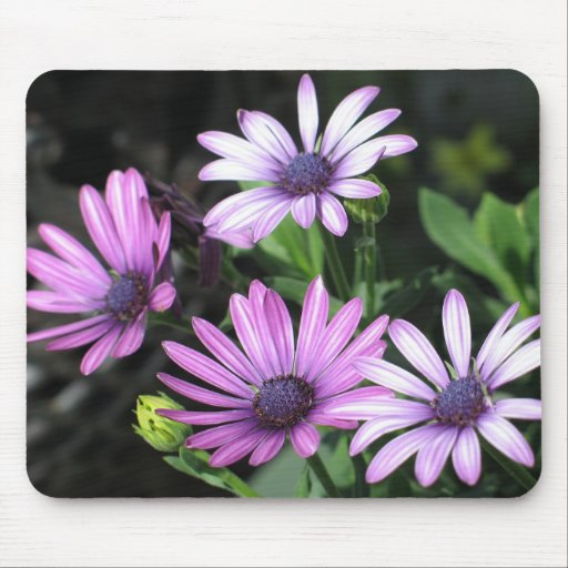 African Daisies Mouse Mats