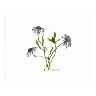 African Daisies Postcards