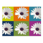 African Daisy Collage Postcard