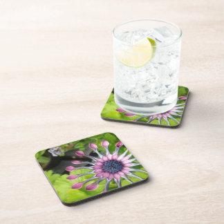 African daisy cork-backed coasters